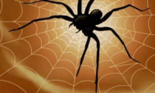 Предсказания черного паука