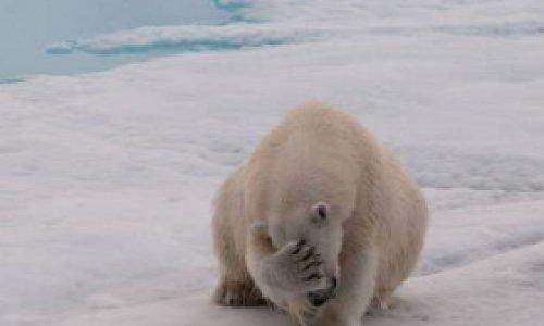 Арктика лишится своих льдов