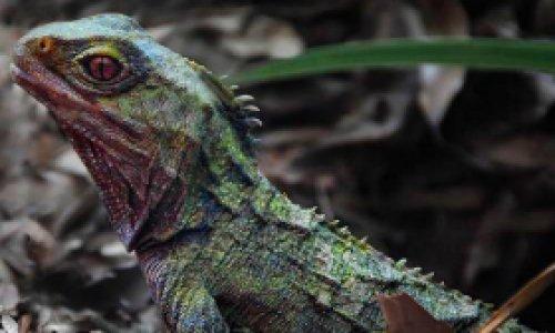 Динозавры не вымерли