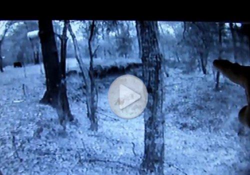 Одному из жителей США удалось снять снежного человека