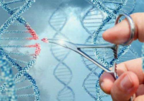 Генетик предлагает остановить эволюцию…