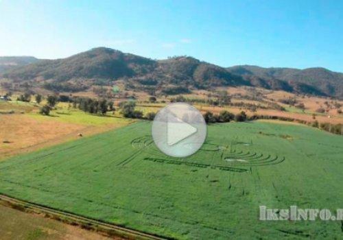 Круг на поле в Австралии