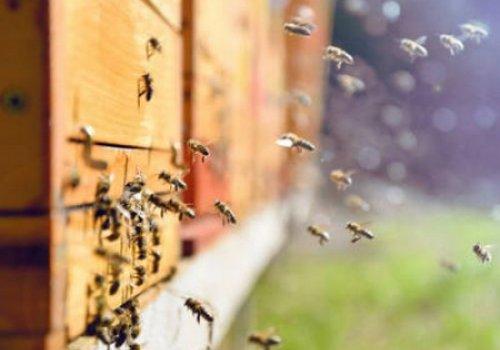 Установили причину массовой гибели пчел