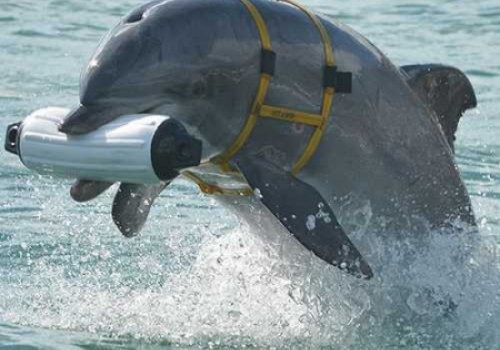 На Украине пропали боевые дельфины