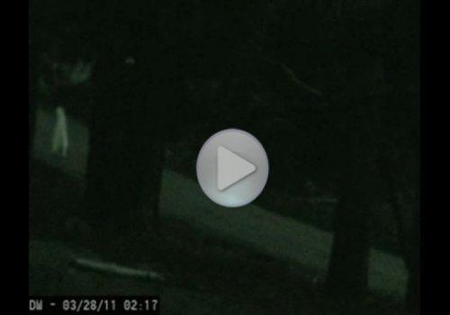 Два очень странных призрака прогуливаются ночью