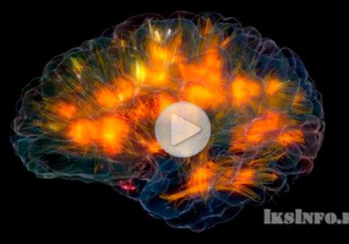 3D модель работы мозга