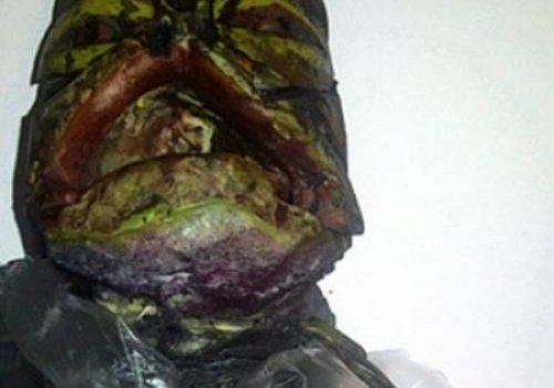 Пенсионерка выкрала труп инопланетянина