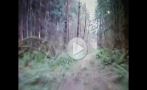 Четкое видео Снежного человека в лесах Огайо