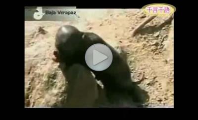В Гватемале был найден живой инопланетянин